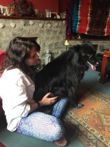 Julie Lovelock animal healing